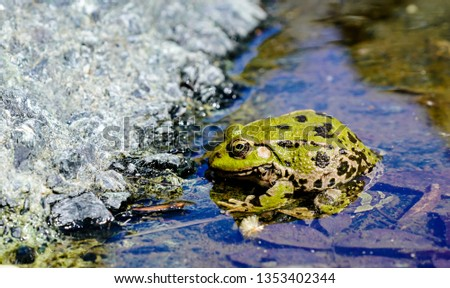 green frog in a pond #1353402344