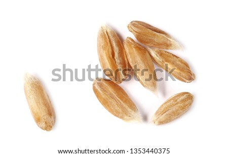 Macro spelt grain isolated on white background, top view  #1353440375