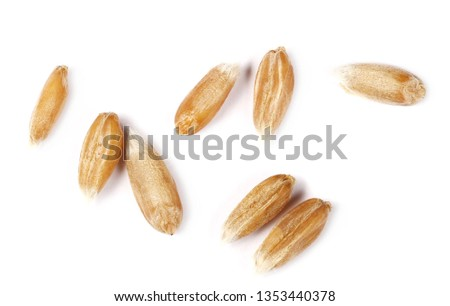 Macro spelt grain isolated on white background, top view  #1353440378