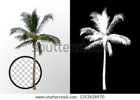 Isolated coconut palm tree on white background with high quality mask alpha channel and clipping path. Suitable for natural articles both on fine print and web page. #1353628970