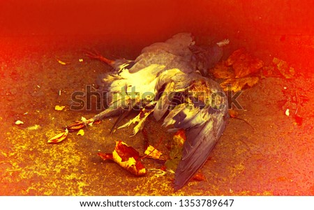 Dead bird. Ugly death, but no fear of death in animals #1353789647