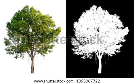 single tree on transparent picture background with clipping path, single tree with clipping path and alpha channel on black background  #1353987722