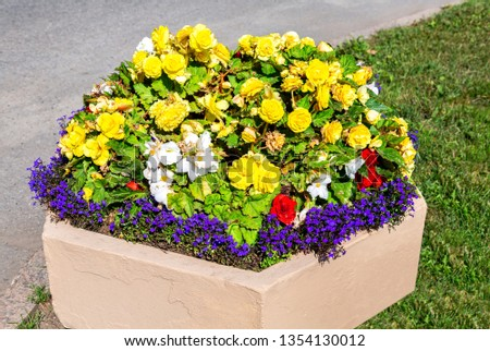 Decorative flowerbed with yellow, blue and white flowers. Colorful flowers decorative composition in sunny day #1354130012