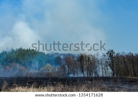 Burning field of dry grass and trees on the background of a large-scale forest fire. Wild fire due to hot windy weather in summer.  #1354171628