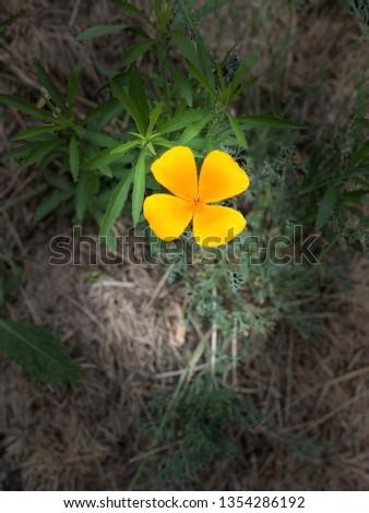 Wild flowers blooming #1354286192