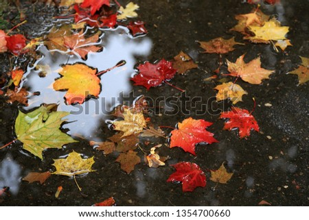 Red, yellow, orange and green autumn leaves scattered over the small puddle on a rainy day  #1354700660