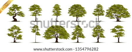 Collection  Realistic  Trees Isolated on White Background #1354796282