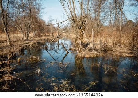 Summer landscape. swamp, marsh, bog, quagmire, morass, backwater. An area of low-lying, uncultivated ground where water collects #1355144924