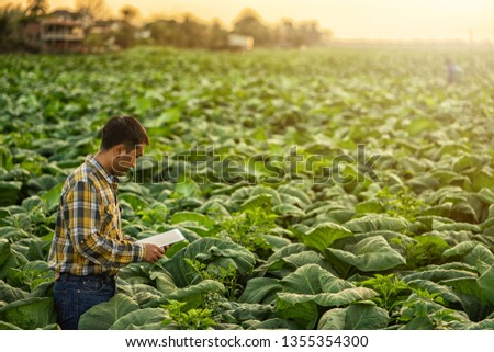 Farmer researching plant in tobacco farm. Agriculture and scientist concept.  #1355354300