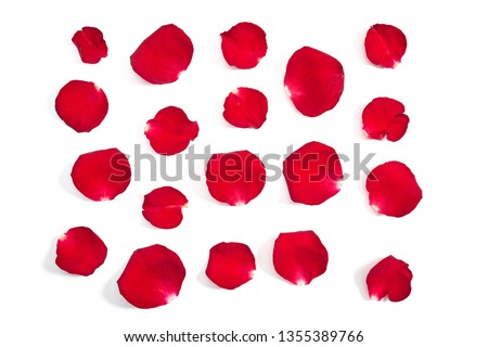 Red rose petals on white background                               #1355389766