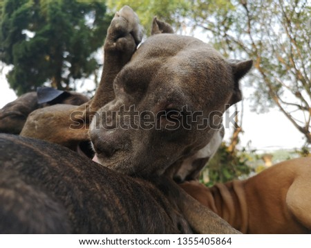 Cute Pitbull Pictures, Mom and baby