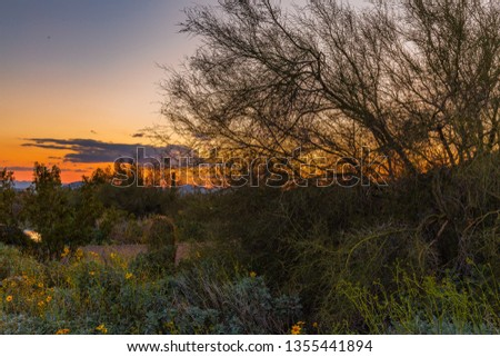 Expansive views of the Sonoran Desert in Arizona during spring time shows the many hues, the green foliage due to the large amount of rain during winter, the yellows, blues and oranges of the wild flo #1355441894