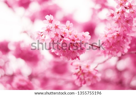 beautiful selective focus of cherry blossom #1355755196