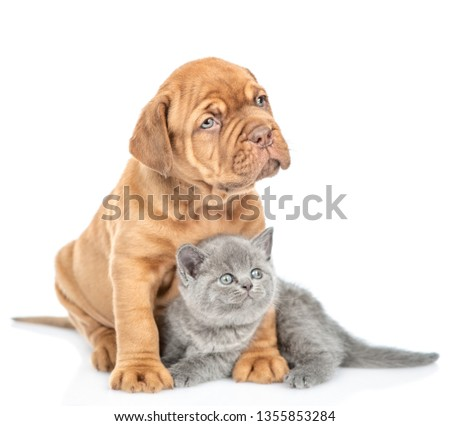 Mastiff puppy embracing kitten and looking away. isolated on white background #1355853284