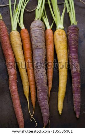Organic rainbow carrots from the local farm. #135586301