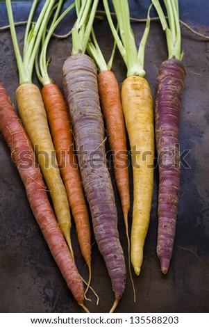 Organic rainbow carrots from the local farm. #135588203