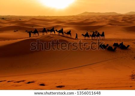 Silhouette of Camel Caravan over sand dune against sunrise in Merzouga, Morroco #1356011648