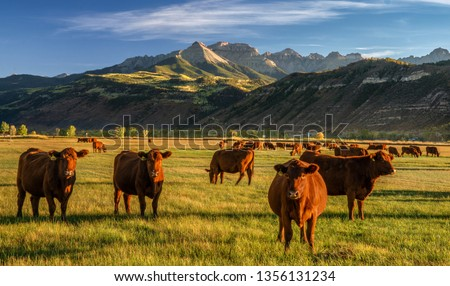 Autumn at a cattle ranch in Colorado near Ridgway - County Road 12 Royalty-Free Stock Photo #1356131234
