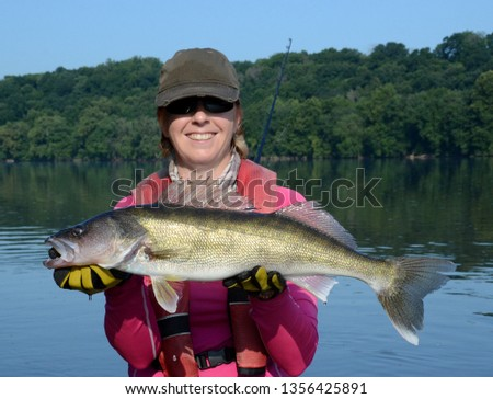 The medium bronze walleye fish being held horizontally in gloved hands over blue water a net and fishing rod on a sunny day #1356425891