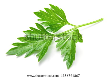 Parsley. Parsley leaf. Parsley isolated. #1356791867