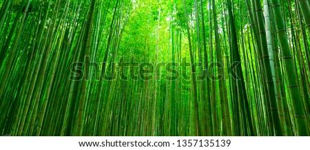 Blurred images of bamboo forest in Arashiyama,Kyoto,Japan. Royalty-Free Stock Photo #1357135139