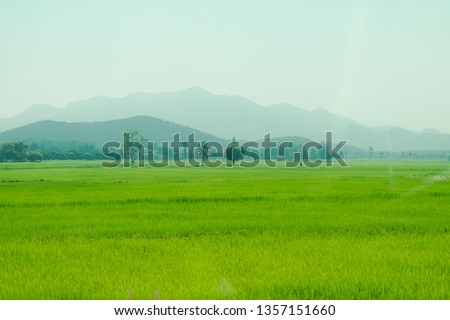 Paddy field farm agriculture in asia #1357151660