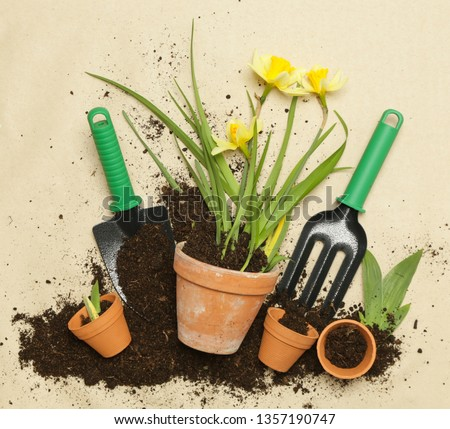 Studio shot of flower planting. Yellow Narcissus flowers in a ceramic pot on the brown paper background, gardening tools studio shot #1357190747