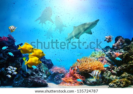 Underwater scene. Coral reef, colorful fish groups, sharks and sunny sky shining through clean ocean water. High res background