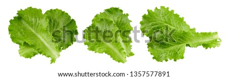 Lettuce leaves isolated on white background. Lettuce salad Clipping Path #1357577891