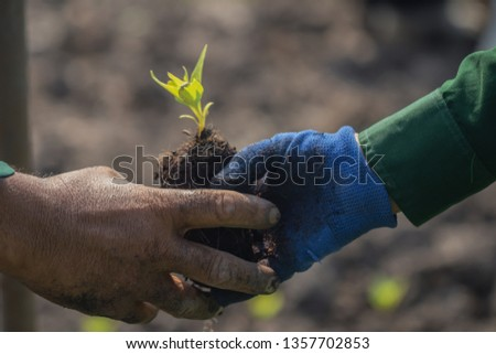 Close up with selective focus on a plant seedling.human hand are planting the seedlings plant. #1357702853