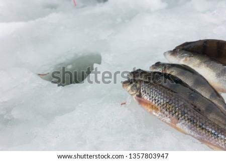 Winter Ice fishing #1357803947