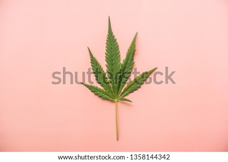 Close-up marijuana leaf on pastel color background