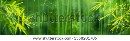 Bamboo forest,Natural background. #1358201705
