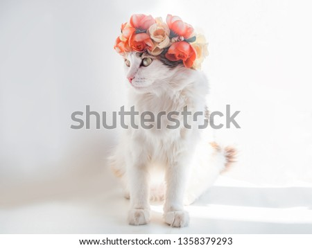 Beautiful Calico Cat with a wreath on his head. Cute kittty in a flowers diadem on her head sits in the sun and looks away #1358379293