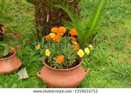 plant with flowers in a clay pot on the lawn #1358616752
