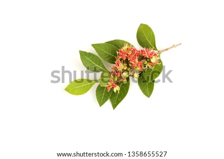 Henna,flowers blooming on white background.
