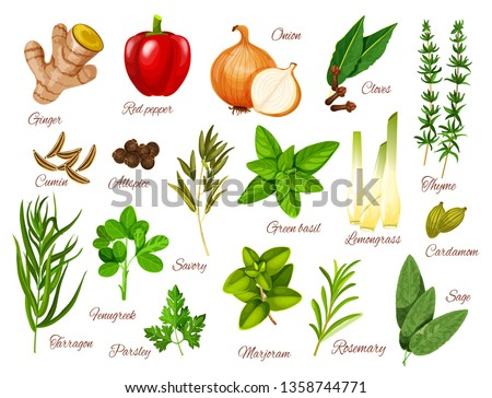 Spices, herbs and vegetable seasonings vector icons of food condiments. Red pepper, green basil and rosemary, ginger, onion and thyme, parsley, marjoram and cardamom, cumin, tarragon and cloves #1358744771