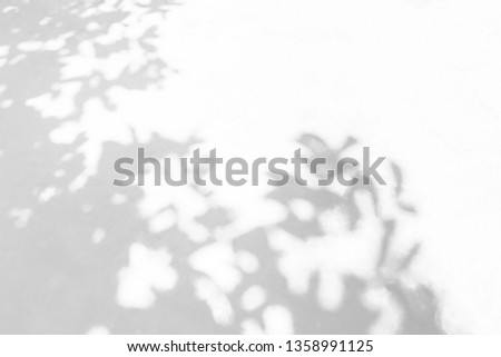 Shadow background of natural leaves tree branch  pattern on white concrete wall texture , black and white monochrome tone #1358991125