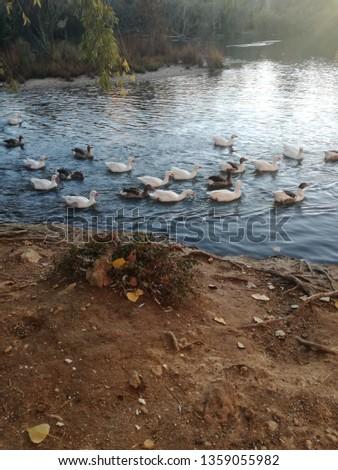 Birds lake water #1359055982