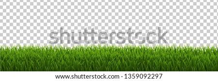 Grass Border Transparent background, Vector Illustration
