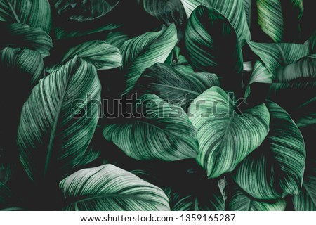 abstract green leaf texture, nature background, tropical leaf #1359165287