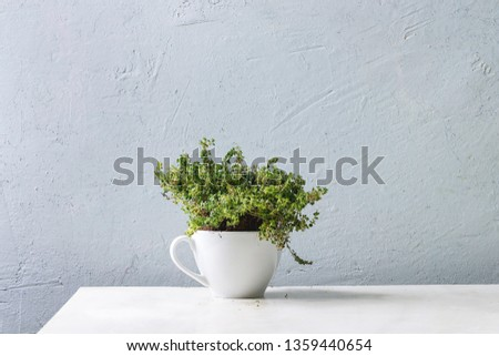 Kitchen table potted gardening greens thyme in white mug over white marble table. Copy space #1359440654
