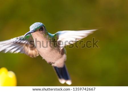 Closeup of flying hummingbird #1359742667