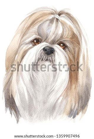 Water colour painting of Shih Tzu