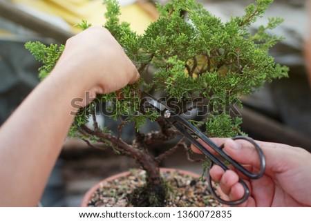 Making of bonsai trees. Handmade accessories wire and scissor bonsai, bonsai tools, stand of bonsai. #1360072835