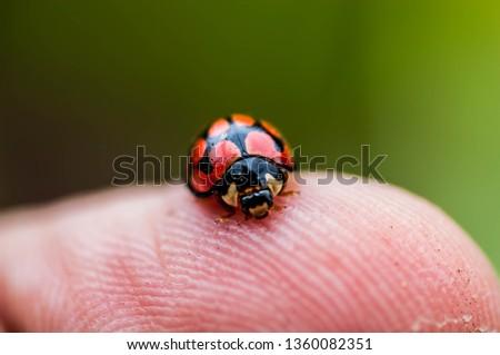 red bug on finger #1360082351