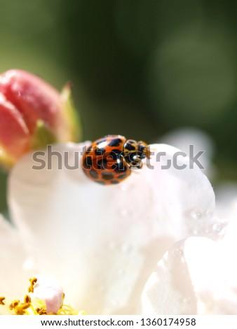 Ladybug close up #1360174958