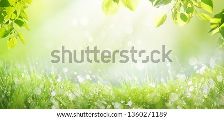 Spring summer background with a frame of grass and leaves on nature. Juicy lush green grass on meadow with drops of water dew sparkle in morning light outdoors close-up, copy space, wide format. #1360271189