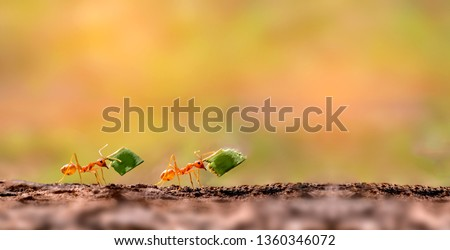 Two Ants are carrying on leaves .Amazing Strong Ants. Royalty-Free Stock Photo #1360346072
