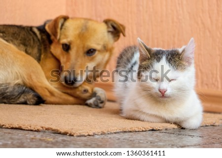 The dog and the cat are lying on the carpet together. Dog and cat are friends #1360361411
